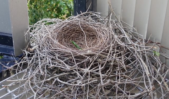 I Thought The Empty Nest Thing Would Be Easier This Time - Writer | Unfocused